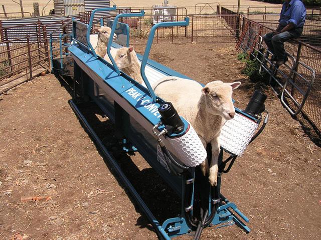 """Dit is een soort elektrisch aangedreven """"fixatietunnel"""" waarmee bijvoorbeeld lammeren en geiten kunnen worden vastgezet zodat ze minder bewegingsvrijheid hebben gedurende o.a. de islamitisch-rituele slacht."""