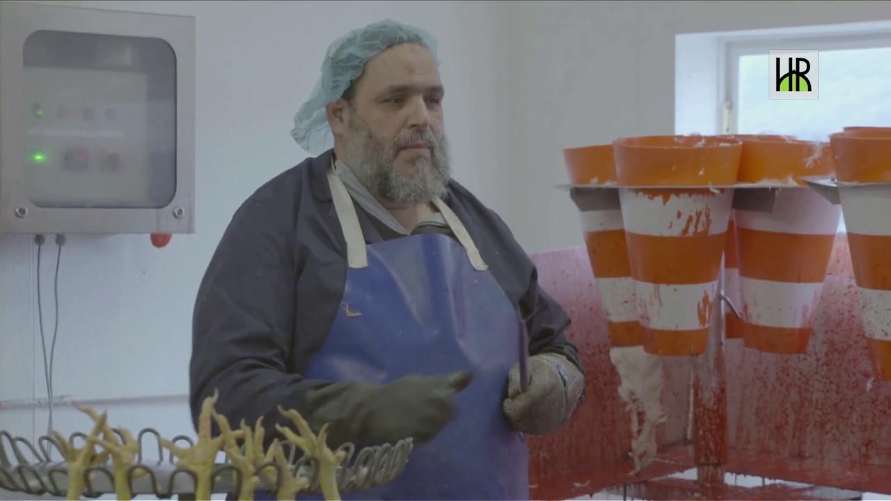 Op bezoek bij Halal Slachtboerderij De Frissche Roemer